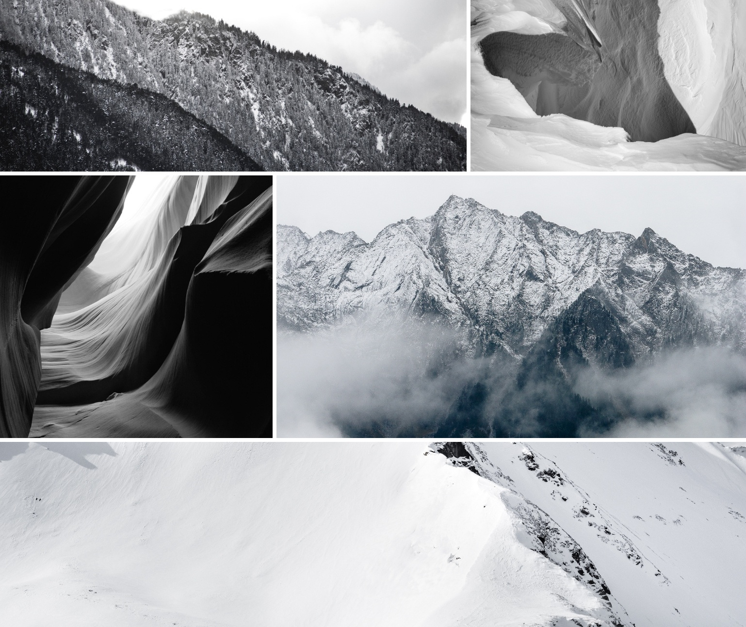Black and white nature photos in a grid